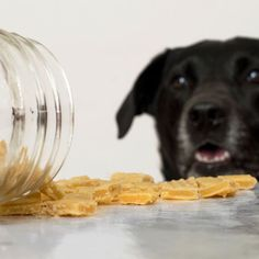 The perfect homemade high-value dog treats for training. Easy, inexpensive, and irresistible to dogs. Your pup will do anything for these things. Also cat friendly–your cat would probably be willing to trip you for one. From BakingMischief.com