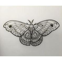 by davidmushaneytattoos #moth #linedrawing #davidmushaney #rebelmuse #linework #mothdrawing