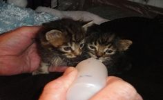 Family Dog Saves Kittens Placed in Bag, Tossed on Highway....AWEEE