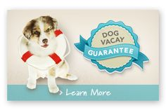 dog with a lifesaver and guarantee  This looks like a great service for dog owners who leave on vacation.
