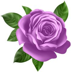 Purple Rose Transparent PNG Clip Art Purple Rose Transparent PNG Clip Art Th… – beauty flowers Beautiful Flowers Images, Beautiful Flowers Wallpapers, Flower Images, Beautiful Roses, Flower Art, Rose Flower Wallpaper, Pink Lake, Free To Use Images, Flower Clipart