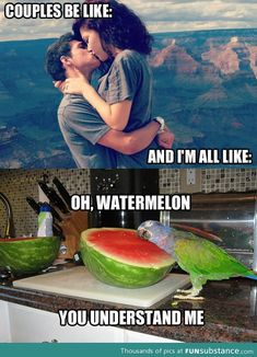 Even though I've got a bf, this made me die!! The birds face! Gets funnier the more you look at it!