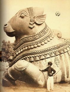 Old photograph of large monolithic Nandi, Chamundi hills, Mysore(Karnataka)  This is a granite monolithic sculpture about 16 feet in height and 24 feet long, this Nandi atop the Chamundi Hills is the third largest in India. The creation of this colossal image is attributed to Dodda Devaraja Wodeyar (1659–1673) on of the illustrious Maharajas of Mysore. The nandi wears a Ghantala mala, a bell chain, earrings and other jewellery.
