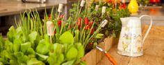 Comendo o que planta! -  Os benefícios de cultivar o próprioalimento      Seja cultivando tomates, feijão vagem, pepinos, chuchu, frutos, repolho, couve-flor, alface, chicória, rúcula ou outras hortaliças em geral, umacoisa é fato: o cultivo orgânico e caseiro não para de crescer.    É cada vez mais comum e... - http://www.ecorepelente.com/ecoblog/2016/10/15/comendo-o-que-planta/