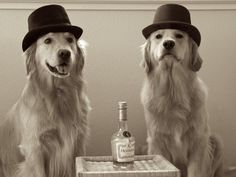 Dogs pretending to be drinking men...