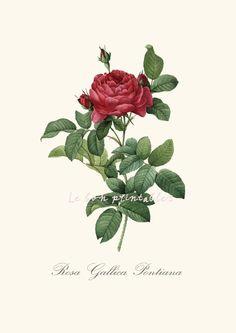 INSTANT DOWNLOAD  Vintage rose printable art door Lebonprintables, €2.00