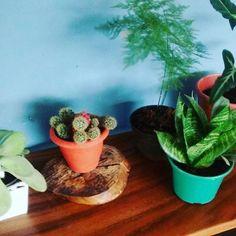 Meu cantinho de plantinhas!!My plants, so cute!!