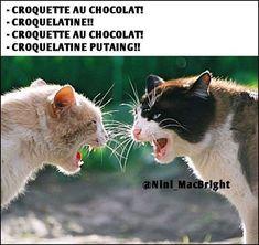 Croquelatin - Emi Kinotsuki - The Humour que J'M Super Funny Memes, Funny School Memes, Funny Babies, Funny Kids, Fun Funny, Funny Kid Costumes, Funny Face Swap, Funny Animals, Cute Animals