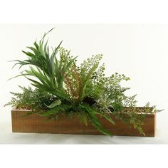 DandW Mini Staghorn Fern and Mixed Foliage Planter >>> Want to know more, click on the image.