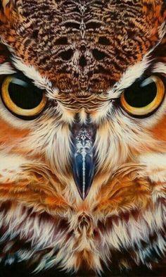 Barn Owl In A Tree Birds Owls Nature And Animal Photography Animal Barn Birds Nature Owl Owls Photog Bird Kite, Owl Bird, Pet Birds, Angry Birds, Flying Birds, Birds 2, Owl Photos, Owl Pictures, Beautiful Owl