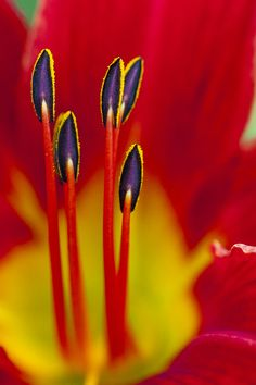 ~~lily.,, macro by james cory~~