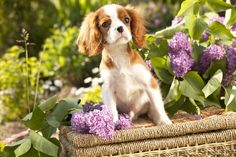 How to Manual for Garden with Pets