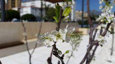 Paseos de Primavera 2015 en Bulevar San Pedro Alcántara