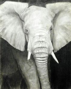 Elephant drawings | Charcoal drawing, by Mark Bonner