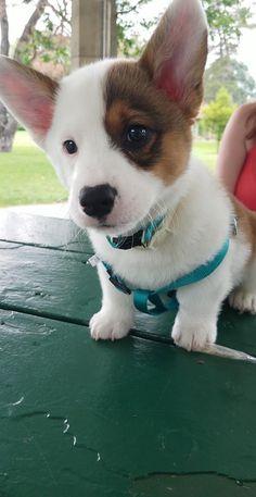 10 week old Fritz