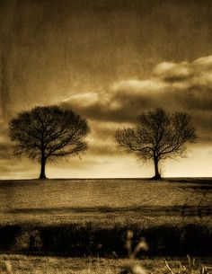 Textured Scene by Dave Carter · 365 Project