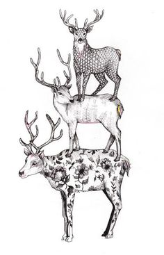 Deer - Ciervo