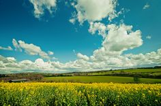 Spring vibrancy by Sunshine-D