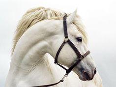 Magic4Walls.com | white horse