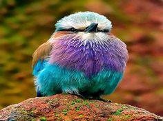 bird colorful - Google 検索