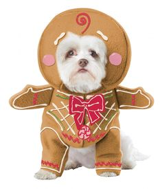 Let your pet join in on the costume fun with Costume Box's range of pet costumes! Shop dog costumes and cat costumes for Christmas, Halloween and more! Pet Halloween Costumes, Pet Costumes, Dog Halloween, Christmas Costumes, Costumes 2015, Halloween Parties, Family Halloween, Adult Costumes, Costume Ideas