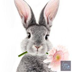 Bunny Nursery, Nursery Wall Art, Nursery Decor, Pink Bedroom Decor, Animal Nursery, Girl Nursery, Bunny Painting, Diy Painting, Rabbit Art
