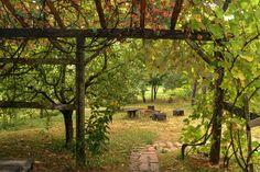 Őrség, Kerek-perec Vendégház www.szallasorseg.hu #őrség #hungary Travel Goals, Hungary, Tourism, Landscape, Fall, Building, Plants, Turismo, Autumn