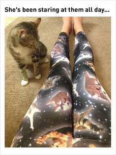 cat on pants funny memes: Ladies Leggings