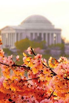 9 Things To Get Excited About In March. In DC, it's all about the cherry blossoms!