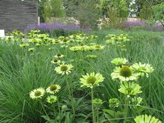 A SHORT HISTORY OF NATURAL GARDENS   A Gardener in France