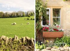 Lambs, green pastures and a bench in the sun
