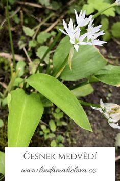 Detox, Plant Leaves, Plants, Plant, Planets