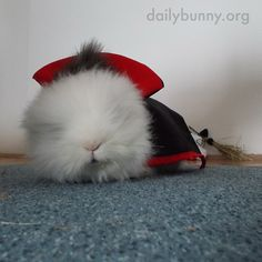 It's the Daily Bunny's Halloween 2014 Mega-Post Part Two! - November 2014 - More photos here: http://dailybunny.org/2014/11/01/the-daily-bunnys-halloween-2014-mega-post-part-two/ !