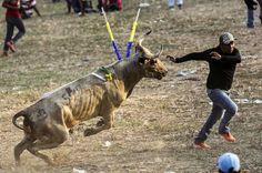 Bull Fight (killing) in Bolivar,Colombia