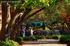 Fall is in full swing on the Ole Miss campus. UM photo by Kevin Bain.