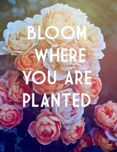 The best quotes about flowers Flower Quotes Life, Flowers Quotes Tumblr, Floral Quotes, Tumblr Quotes, Life Quotes, Qoutes, Quotes Quotes, Bloom Quotes, Crush Quotes