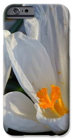 Flower photography, In Stock