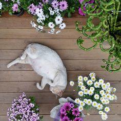 """53 Beğenme, 2 Yorum - Instagram'da Pan Çiçekçilik (@pancicek): """"Bu da bizim Petek. Doğumu beklerken çiçeklerimizin arasında uyumayı pek sever  #ataşhir #pan #çiçek…"""""""