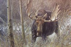 | The Challenge bull moose Original_Painting_by_famous wildlife artist ...