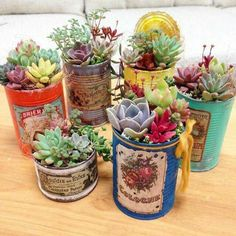 succulent garden care 48 Awesome Repurposed Succulent Planters Ideas - Succulents are perfect plants for dry gardens and are easy to root and grow. Once you learn how easy it is to propagate succulent plants, its a great. Types Of Succulents, Growing Succulents, Succulents In Containers, Cacti And Succulents, Planting Succulents, Planting Flowers, Propagating Succulents, Succulent Gardening, Container Gardening