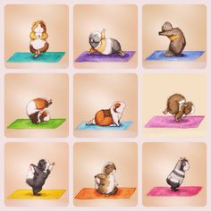 Benefits Of Performing – Standing Head To Knee Yoga Pose Yoga Pictures, Cute Pictures, Animal Yoga, Yoga Illustration, Cute Guinea Pigs, Pig Art, Cute Piggies, Bunny Art, Yoga For Kids
