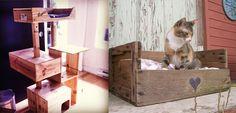 10 ideias para fazer móveis sustentáveis para o seu gato