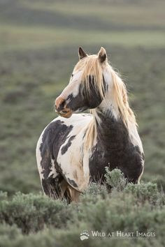 """The wind of heaven is that which blows between a horse's ears."" ~ Arabian Proverb."