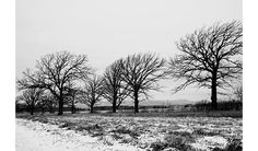 Winter Photograph Rustic Wall Decor by LostInTheValleyPhoto
