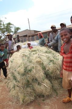When teff is done being processed for food, this remains and is used to make area homes in #Ethiopia