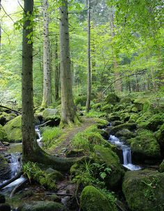 Black Forest, Germany. I would love to go back an hike here again the most beautiful place ive been