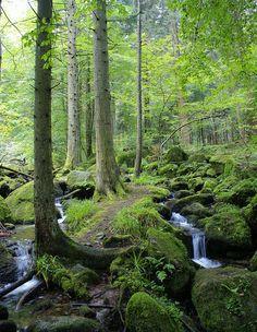 Schwarzwald: Diese Stimmung könnte überall in unserem Stadtwald von Baden-Baden sein. Einfach paradiesisch.  http://www.hotel-am-sophienpark.de/