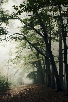 tearingdowndoors:  Haunted Forest||Bob van den berg