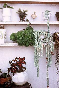 Hangende vetplantjes.