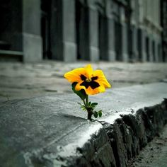Nature Always Finds Its Way Never Give Up